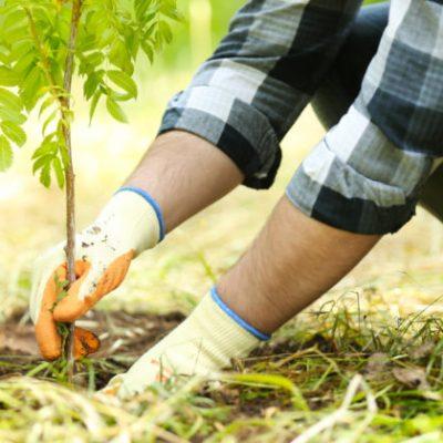 Tree Planting 2020